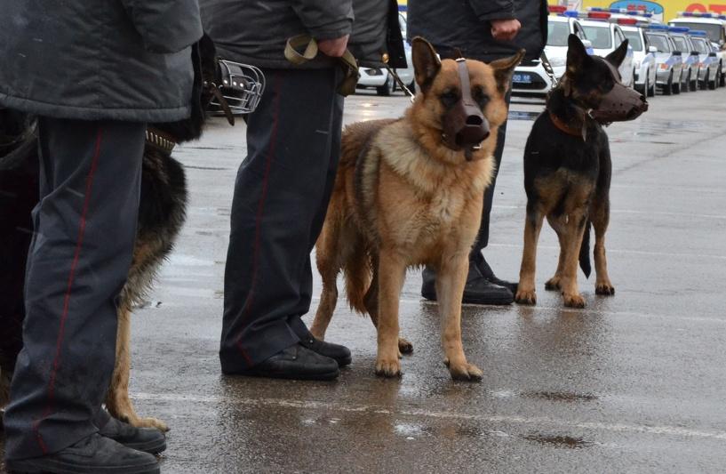 В Тамбовской области объявили в розыск трёх мужчин