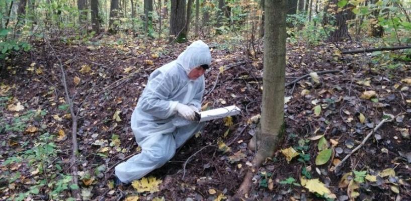 В лесах региона разложено свыше 350 тысяч доз вакцины от бешенства