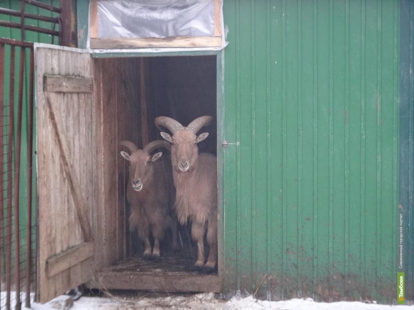 Животные Тамбовского зоопарка зимуют в комфортабельных вольерах