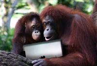 Зоопарки закупают айпады для приматов