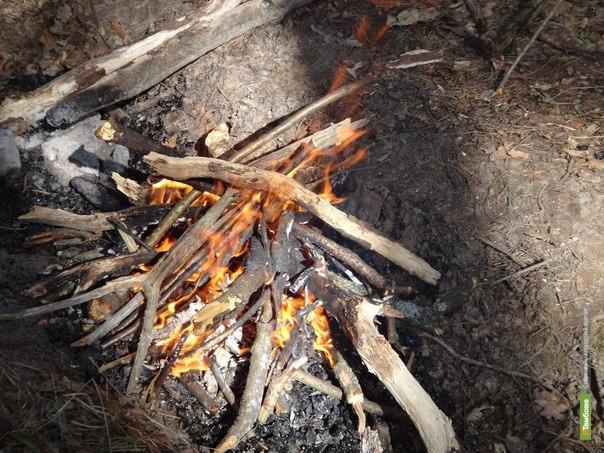 В тамбовских лесах установилась высокая вероятность пожаров