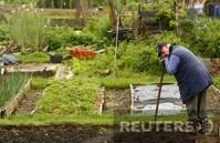 Садоводам России выделят 200 млн рублей