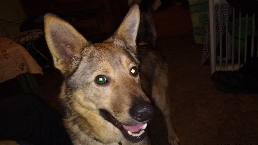 «Если бы не Атос...»: как собака из приюта спасла тамбовчан во время пожара