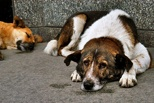 Тамбовские парламентарии вновь не приняли закон о бродячих животных