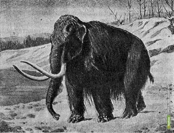 На Крите найдены следы карликовых мамонтов