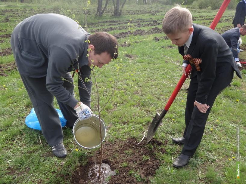 К Всероссийскому дню леса тамбовчане посадили двести деревьев