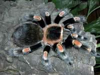 Тамбовский зоопарк покажет новых пауков