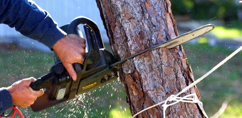Компенсационный сбор за вырубку деревьев пойдёт в городскую казну