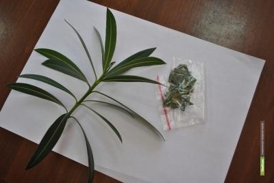 Жительницу Мичуринского района поймали с марихуаной
