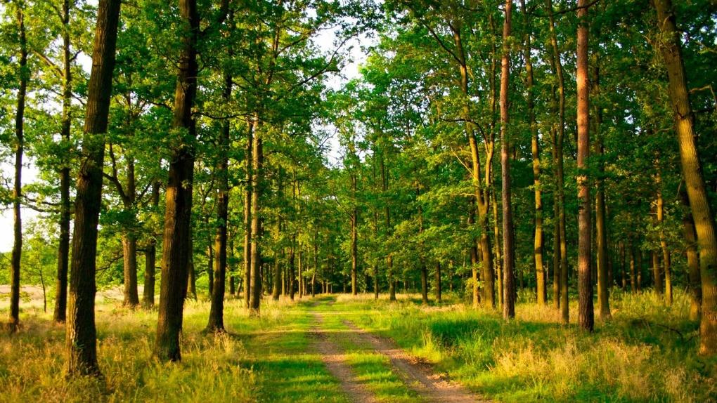 Зелёные аллеи: на Тамбовщине высадили более 500 тысяч деревьев