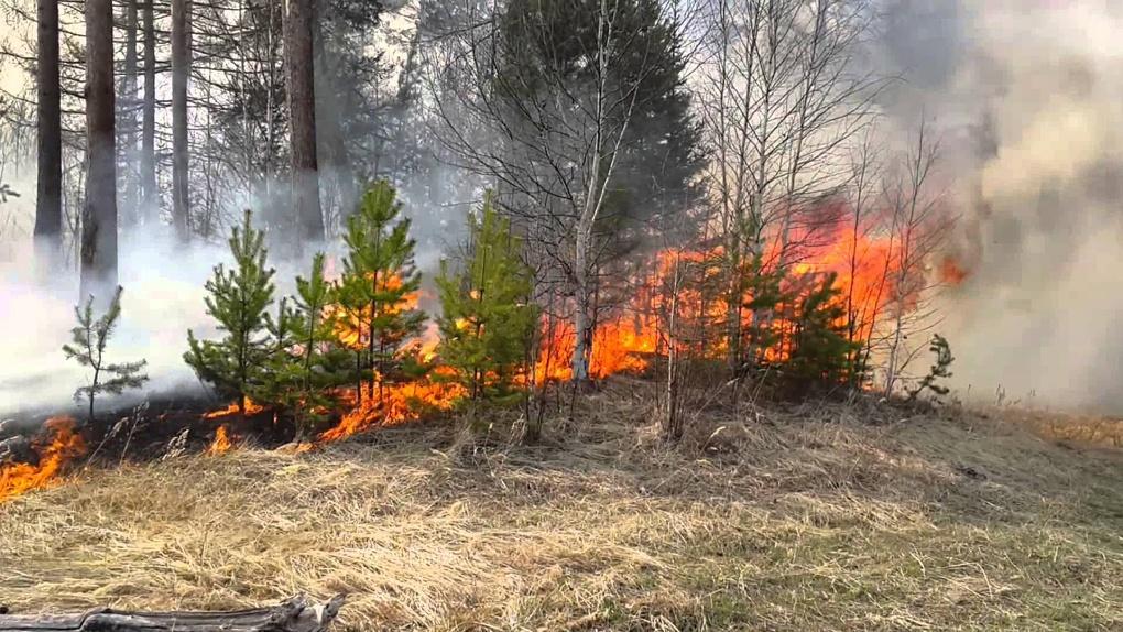 Спички – не игрушка: на Тамбовщине установили четвертый уровень пожароопасности