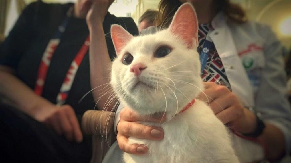 В России назвали имя самого популярного…котика