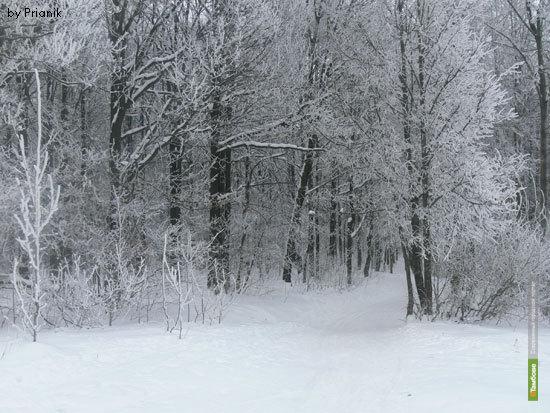 Леса Тамбовщины защитят от пожаров и вредителей