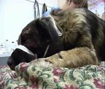 Юрий Верещагин готов оплатить лечение покалеченного им пса