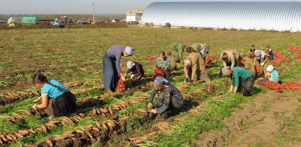 Урожай тамбовских полей выдался в этом году высоким