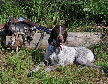 В Тамбовской области открылся сезон охоты на пернатых