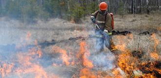 С начала года в регионе зафиксировано более 250 возгораний в лесных массивах