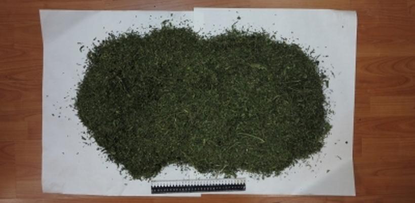 Полицейские региона за сутки изъяли 171 грамм марихуаны