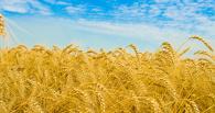 Самая привлекательная отрасль для инвесторов на Тамбовщине – сельское хозяйство
