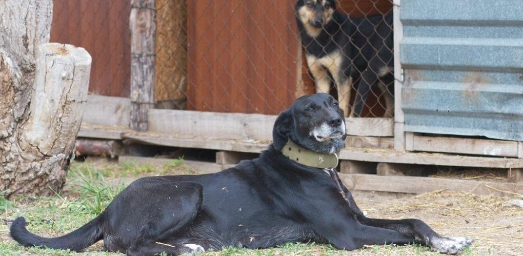 В одном из посёлков Тамбовской области убивают собак на глазах у хозяев и детей
