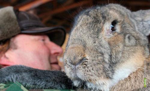 Немецких заводчиков удивил тамбовский кролик