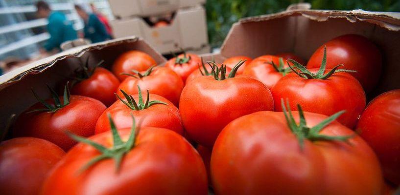 В Россию прибудут томаты из Турции
