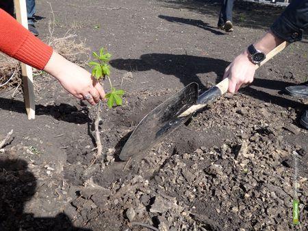 На Тамбовщине посадили ещё 400 деревьев и кустарников