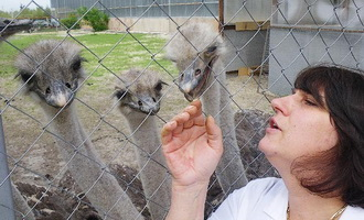 Тамбовские фермеры начали разводить павлинов и страусов