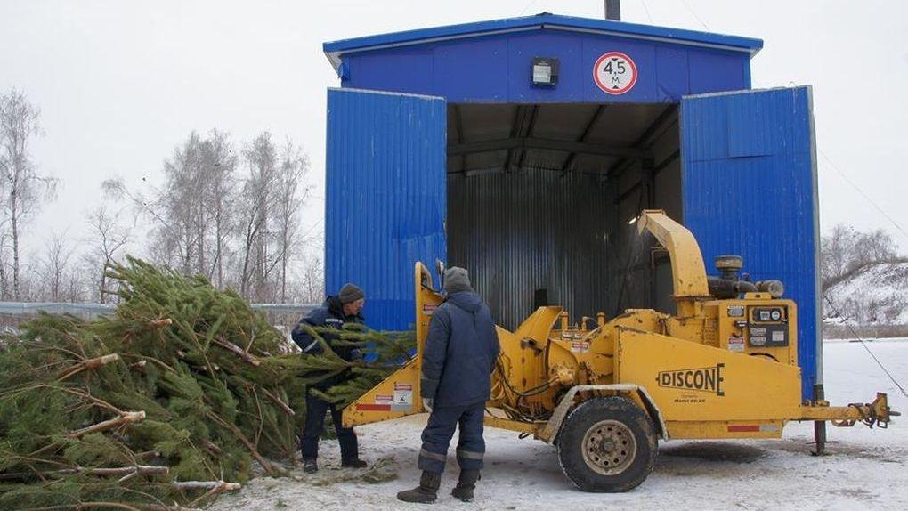 Тамбовские елки — на НТВ. Нам показали, что происходит с новогодними красавицами после праздников