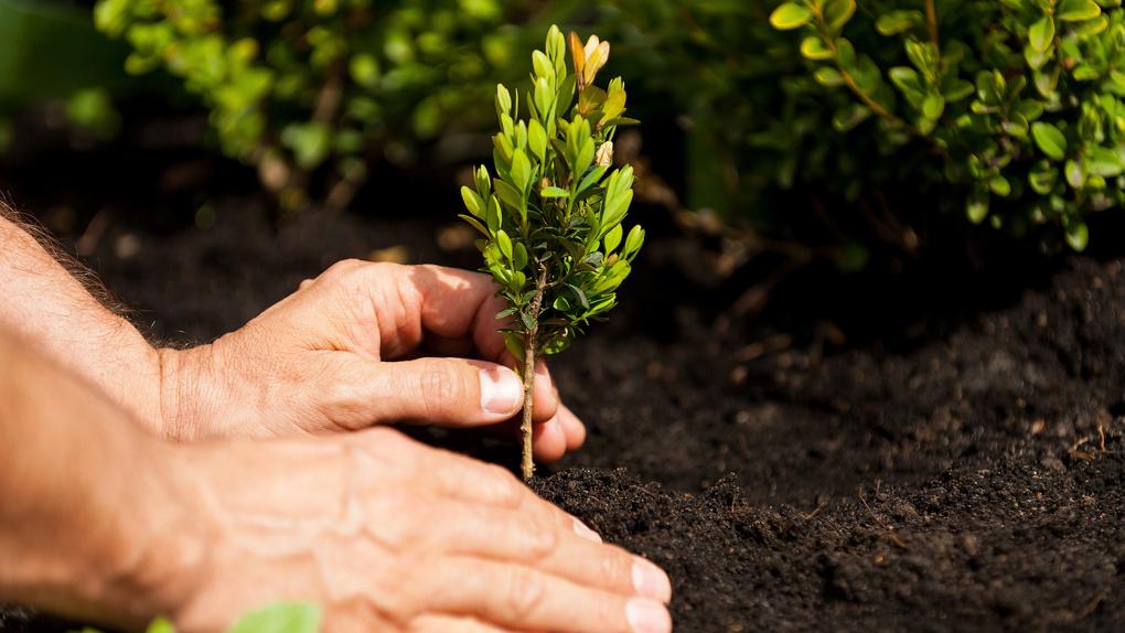 Новые лёгкие города: под Тамбовом высадят около 10 тысяч деревьев