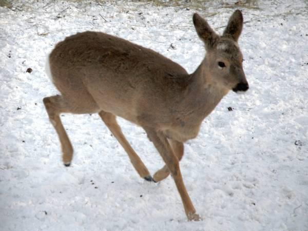В области увеличилась численность краснокнижных животных