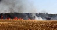 В Сосновском районе сгорело 20 гектаров поля