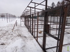 Строительство приюта для бездомных животных сдвинулось с мертвой точки