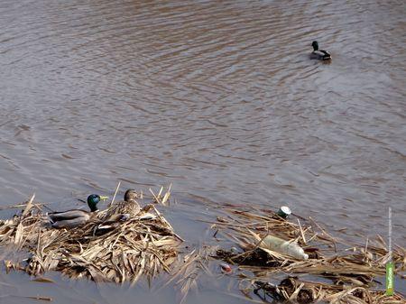 Судам разрешат бороздить тамбовские реки на следующей неделе