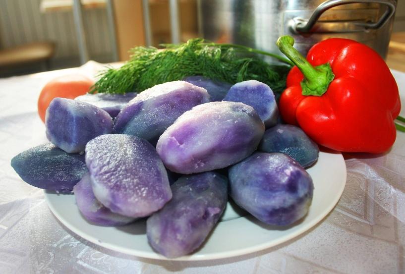 В Мичуринске вывели фиолетовую картошку