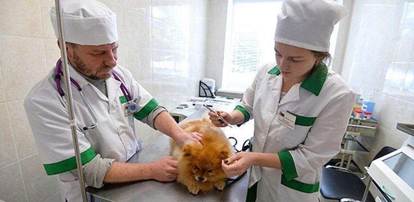 Всех животных в России промаркируют