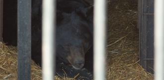 Медведи не спят: как обстоят дела в Державинском зоопарке?