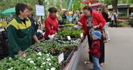 На ежегодном фестивале цветов тамбовчан научат правильно обрезать деревья