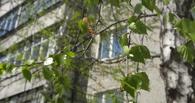 Апрельские заморозки не оставят тамбовчан без урожая