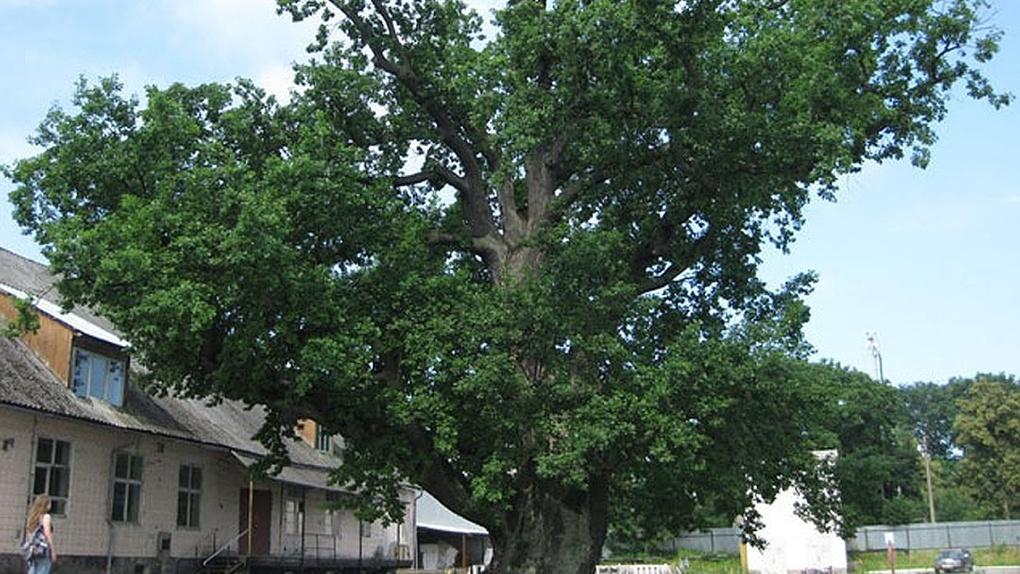 Внимание - деревьям: тамбовчан приглашают к участию в фотоконкурсе