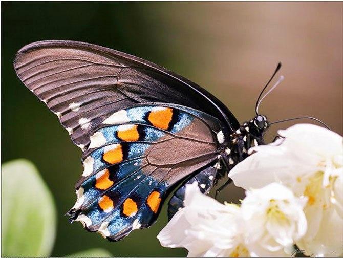 В державинский зоопарк «прилетят» тропические бабочки