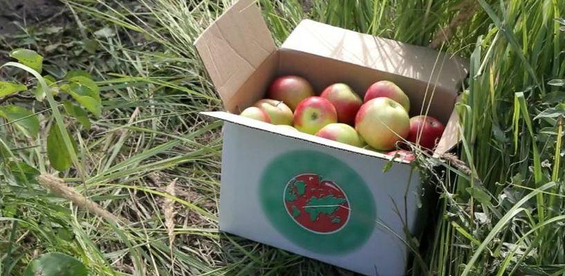 Мичуринские яблоки отправят в космос