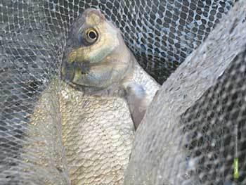 Из тамбовских водоемов выловлены сотни метров браконьерских сетей