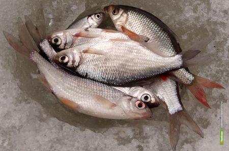 Рыбаки Тамбовщины потягаются в мастерстве