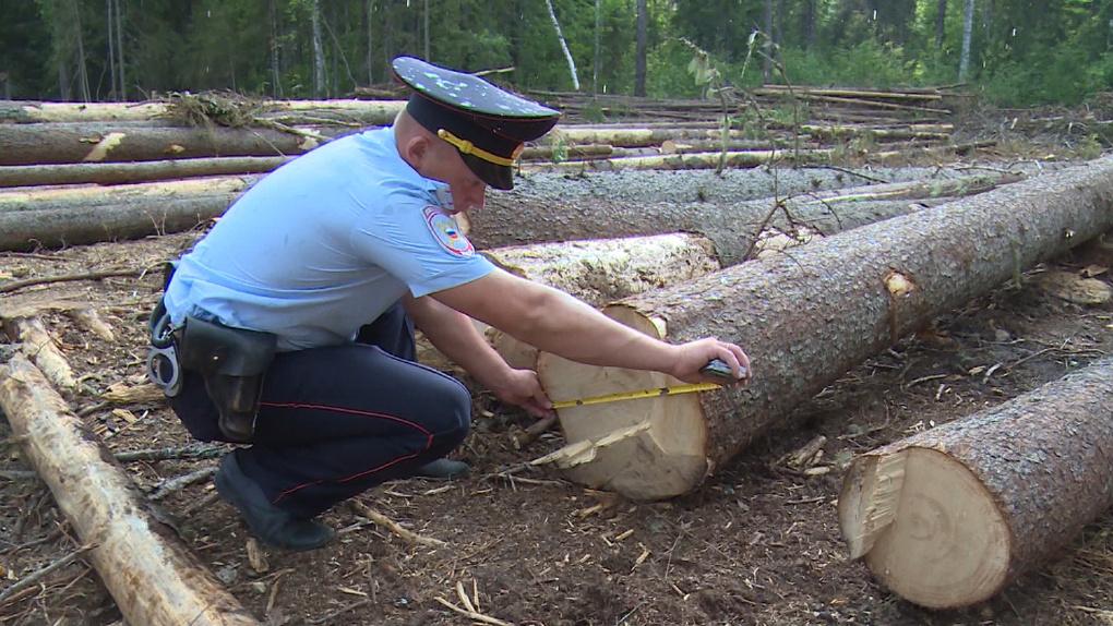 В Бондарском районе незаконно рубили деревья. Идёт следствие