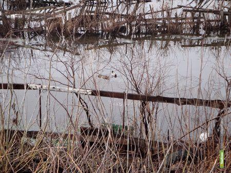 На Тамбовщине подтопило поселок Зелёный