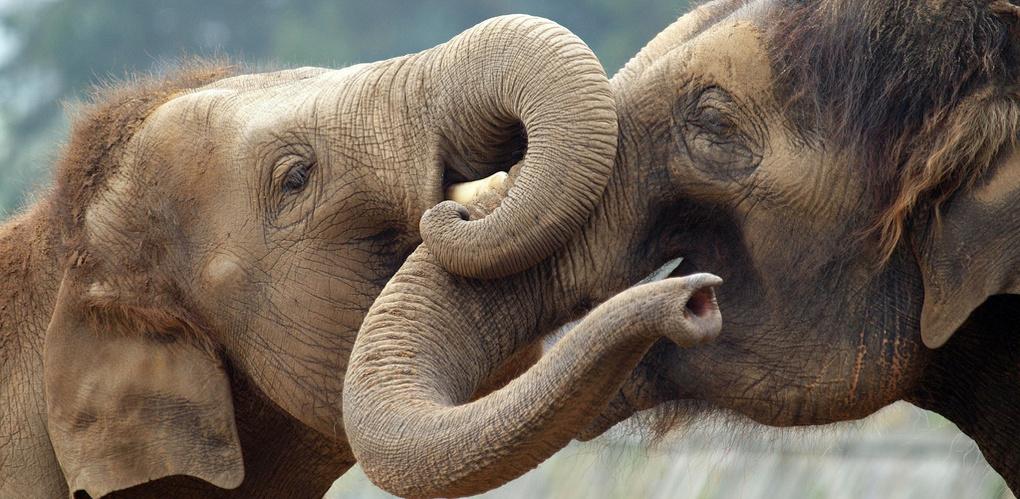 Ученые определили самое заботливое животное в мире
