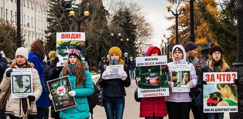 На пикет против хабаровских живодёрок пришло порядка сотни тамбовчан
