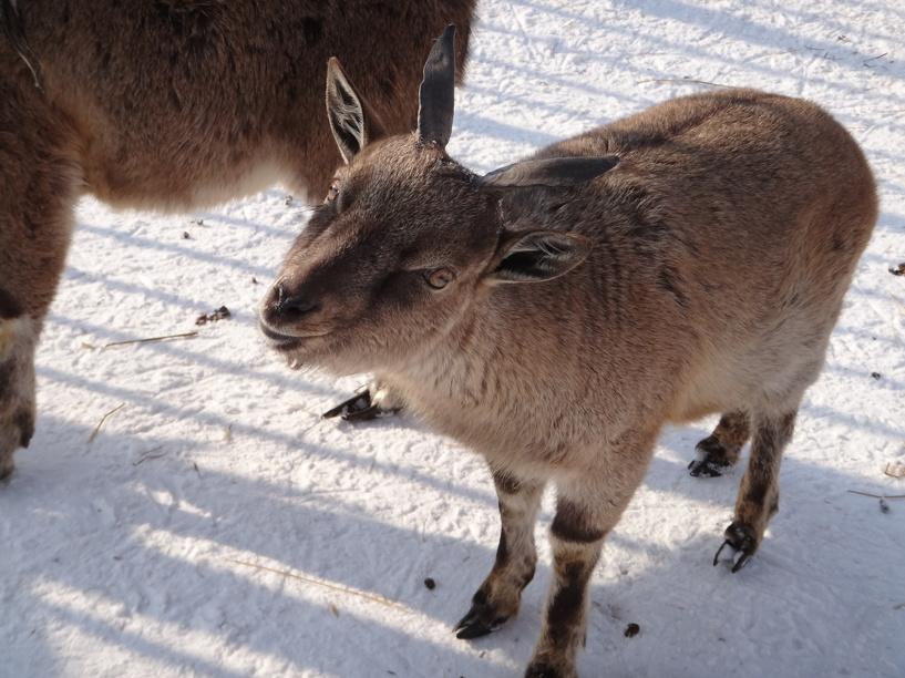 Зоопарк ТГУ на новогодние праздники не закроется