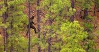 Ученые: судя по шерсти, йети — это медведолошадособакодикобраз